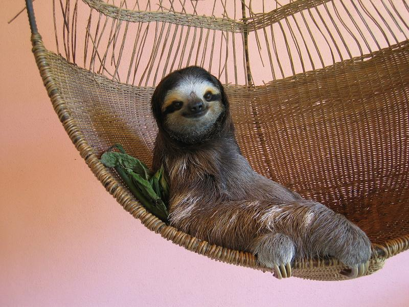 Cute Sloth Wallpaper Healing
