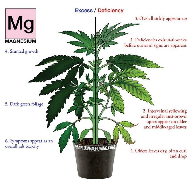 Recover from Magnesium Deficiency with your Marijuana Plants!
