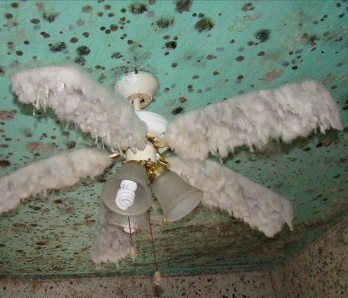 Mold Facts And Information | Servpro Of Fernandina Beach / Yulee