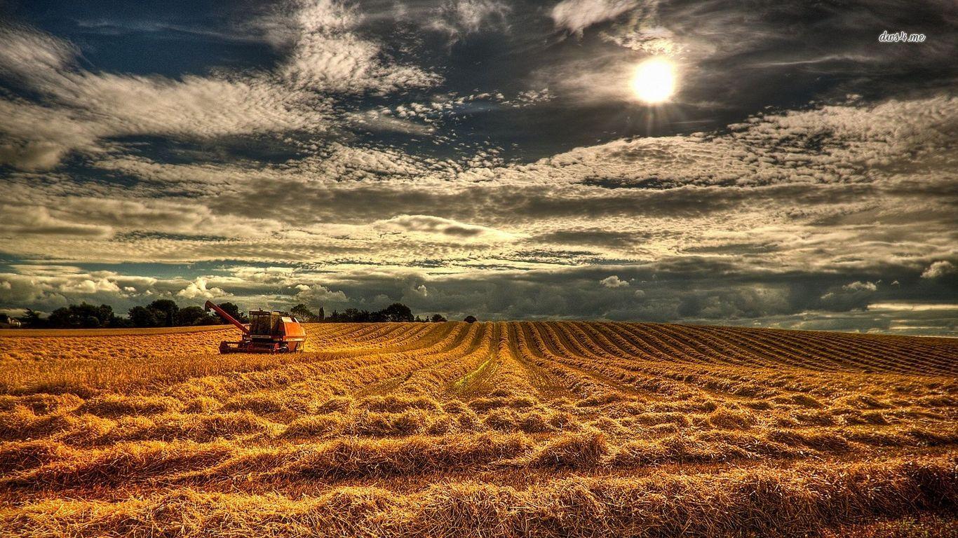Fall Harvest Wallpaper 1024x768 1366x768 Wallpapers Hd