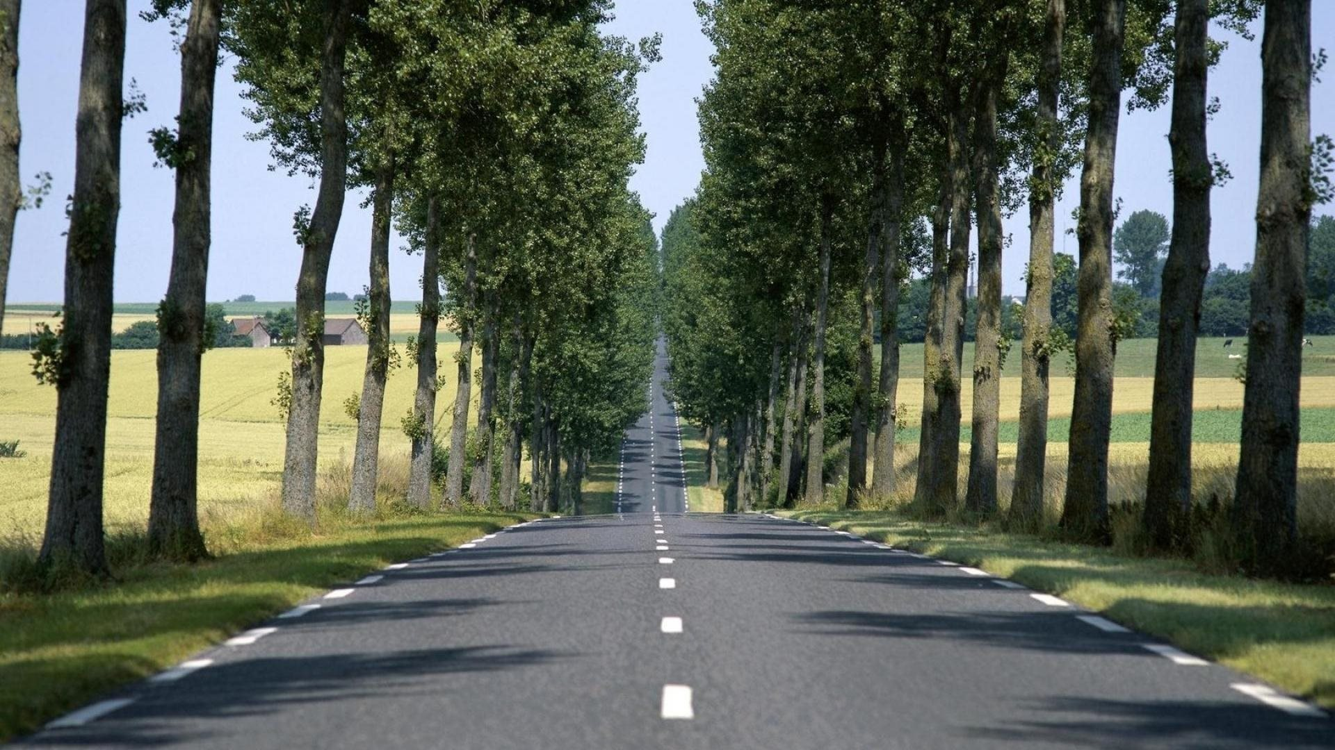 F1 Car Desktop Wallpaper Straight Road Lined By Trees 1920 X 1080