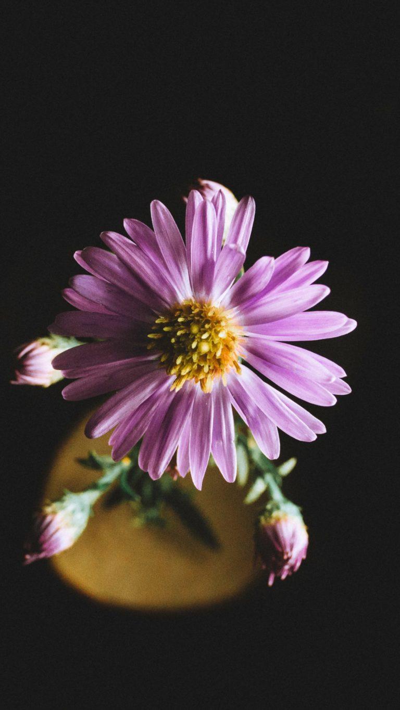 For Honor Wallpaper Iphone Aster Flower Petals Wallpaper 1440x2560
