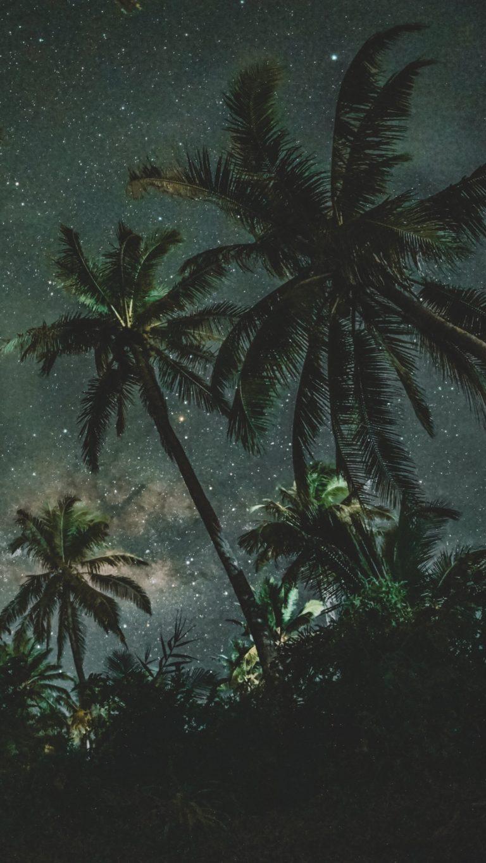 3d Wallpaper For S9 Plus Palms Trees Starry Sky Wallpaper 1440x2560