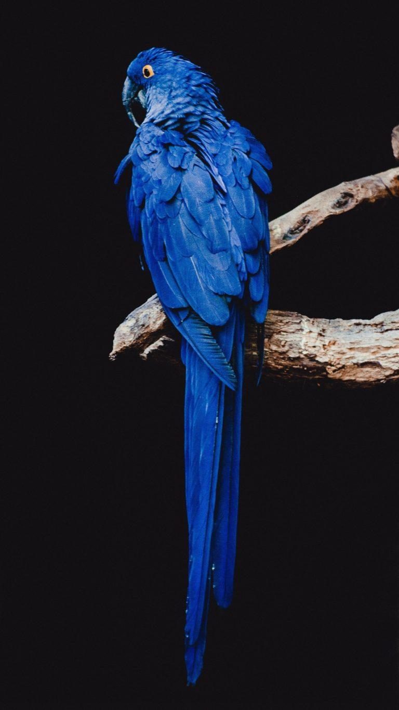 Car Wallpaper 720x1280 Parrot Bird Branch Wallpaper 1440x2560