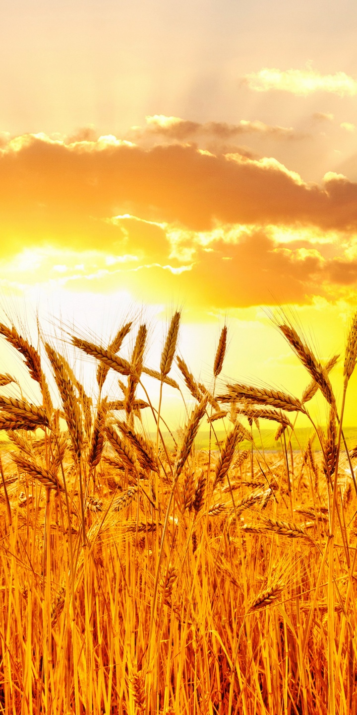 Orange Color Wallpaper Hd Fields Sunrises 720x1440