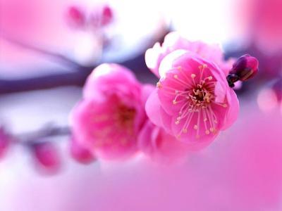 Hot Pink Flower Wallpaper 15 - [1024x768]