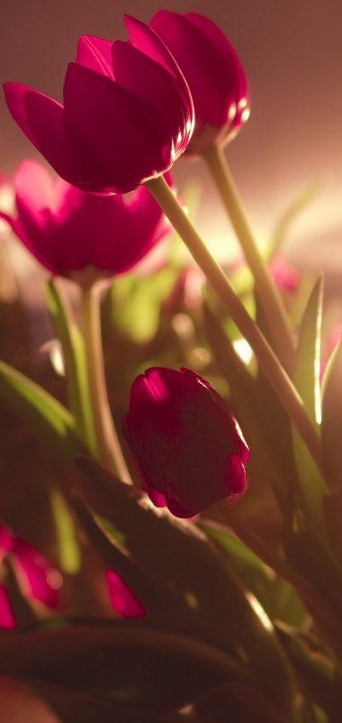 Oppo 3d Wallpaper Tulip Wallpaper 1080x2280