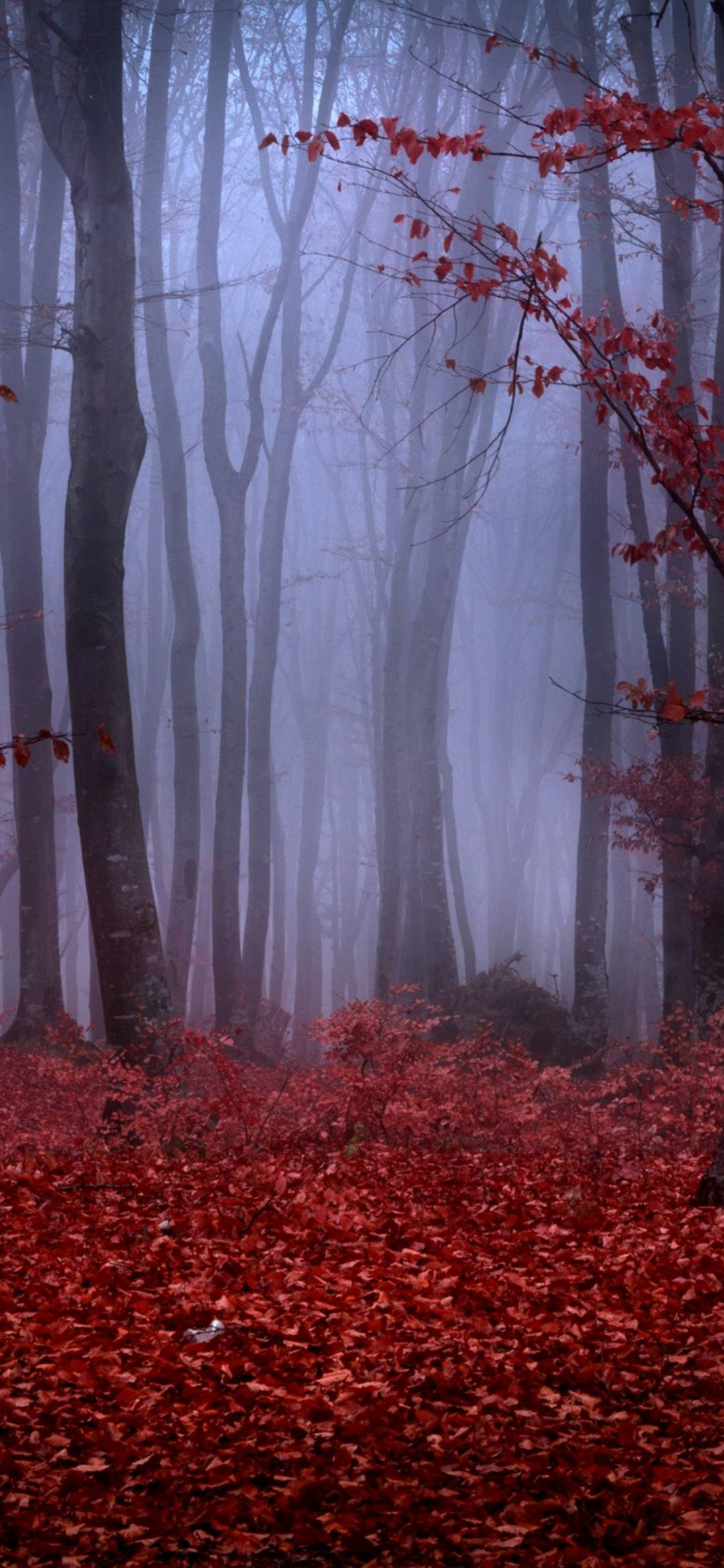 Islamic 3d Wallpapers Download Forest Fog Autumn Trees Branches 1080x2340