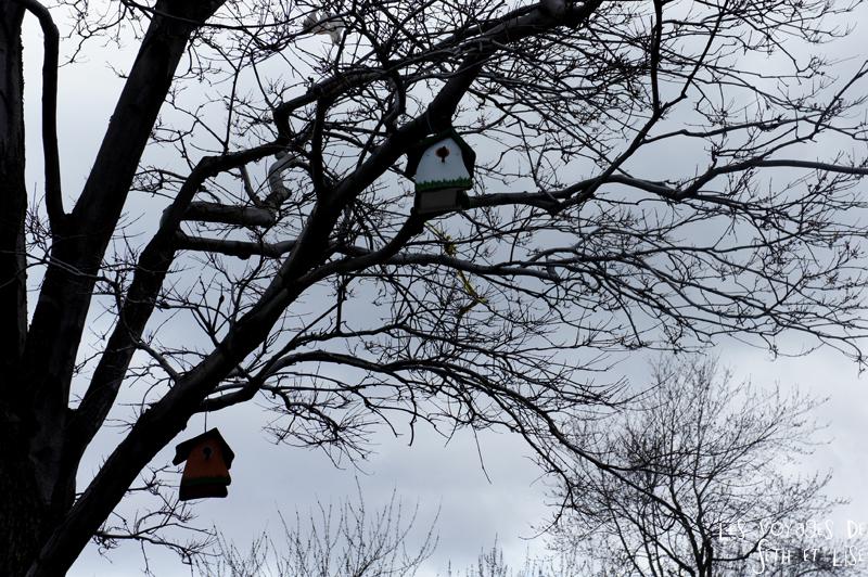 blog voyage canada pvt montreal maison oiseau arbres