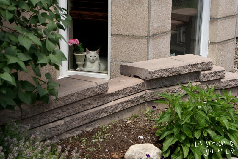 blog voyage pvt canada couple montreal tour du monde rue plateau chat blanc white cat fenetre