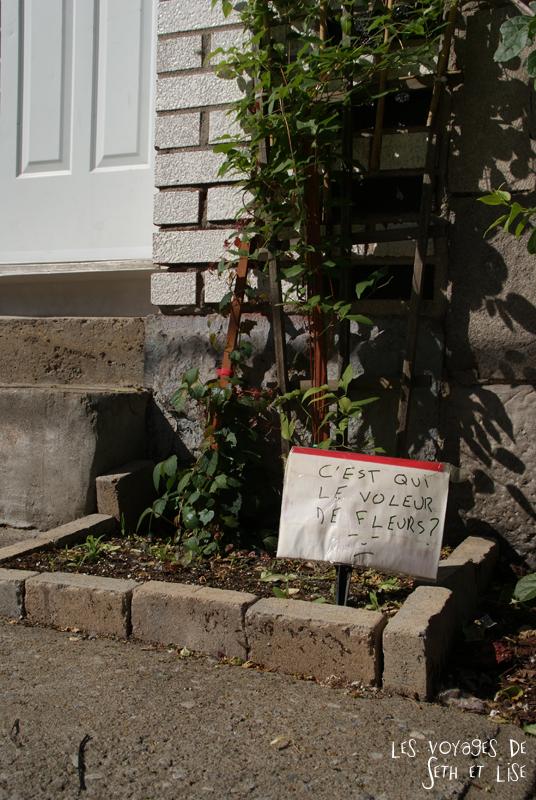 blog voyage canada montreal pvt photo insolite flyer affiche drole message streetart art jardin voleur fleur