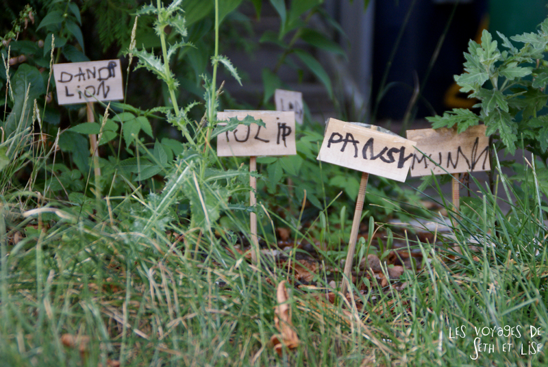 blog pvt canada whv toronto ontartio couple voyage travel tour du monde garden jardin flower