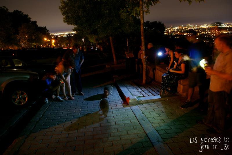 blog pvt canada montreal quebec couple voyage tour du monde raton laveur racoon touriste nourrir