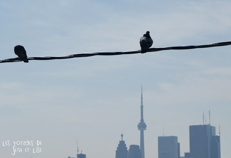 1blog photo voyage pvt canada toronto ontario couple tour du monde travel photography skyline pigeon building