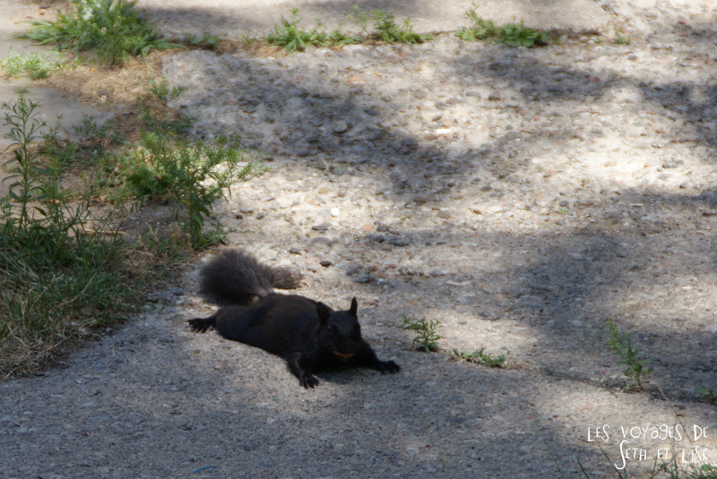 blog photo canada toronto pvt people portrait squirrel ecureuil cute mignon animal