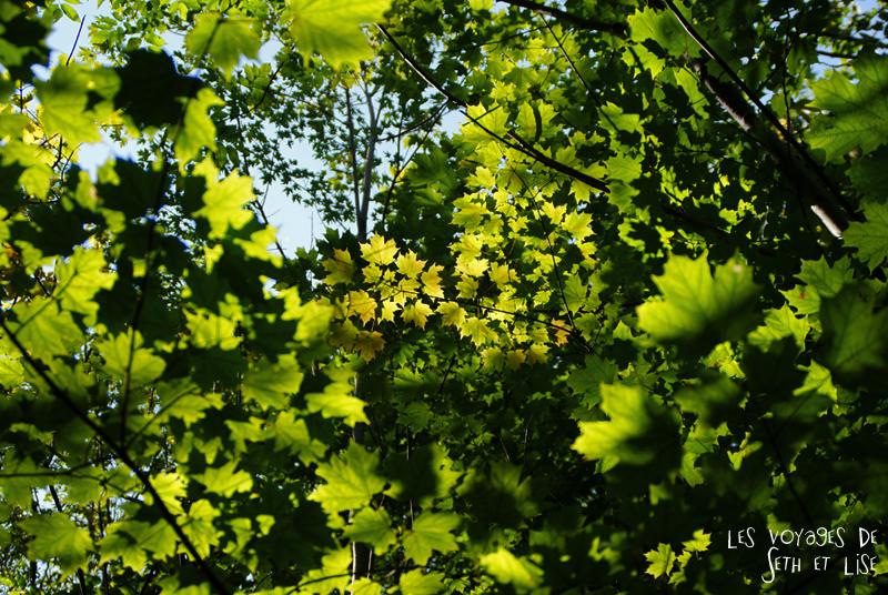 blog pvt canada montreal photographie voyage couple tour du monde quebec feuille erable soleil composition