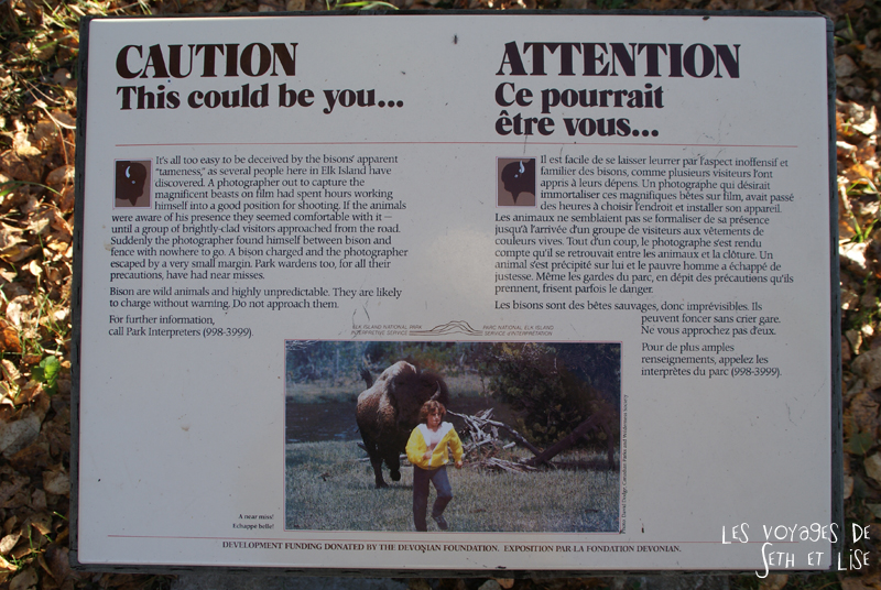 blog voyage canada pvt photo elk island alberta warning bison