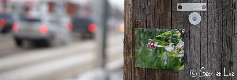 blog voyage canada photo bd humour street art edmonton photo butterfly papillon