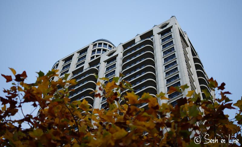blog whv nouvelle zelande pvt voyage photographie seth lise auckland nord ile arbre immeuble