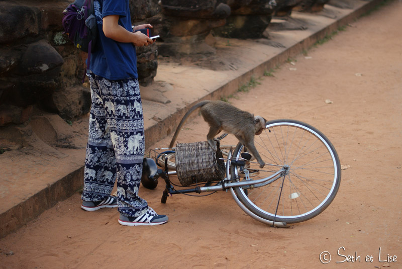 angkor wat cambodge temple siem reap monkey