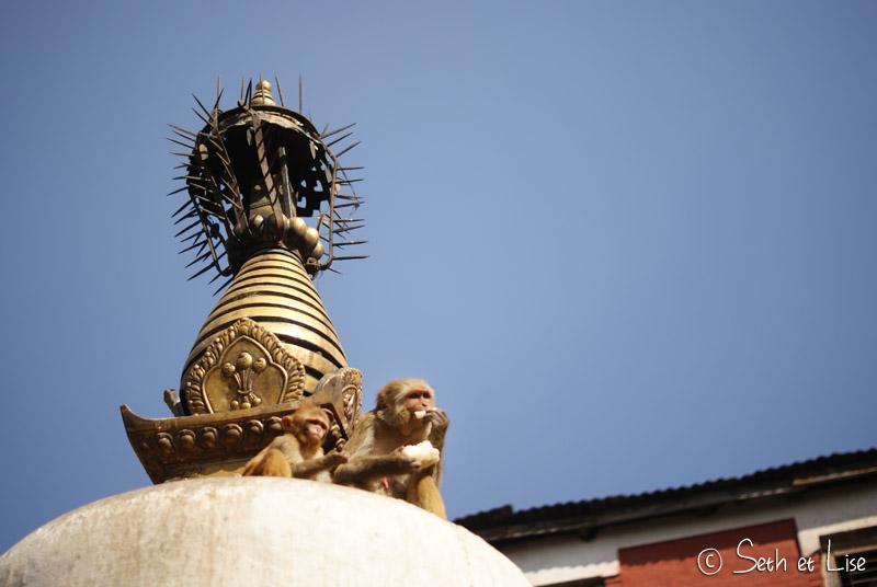 Swayambhunath – Le temple des singes de Katmandou
