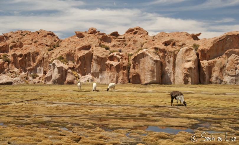 Au coeur de l'altiplano bolivien