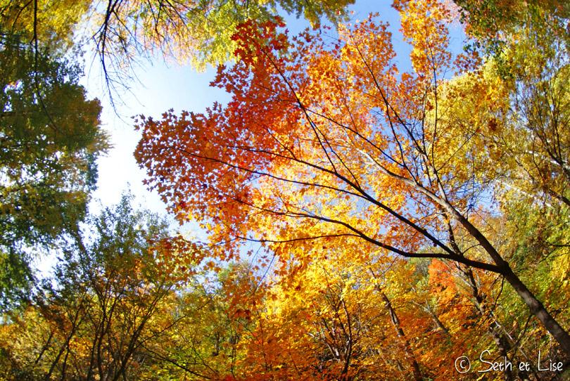 automne fisheye
