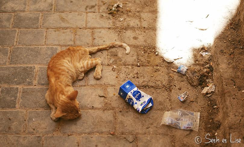 chaton fes maroc
