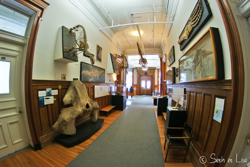 animaux marins redpath museum