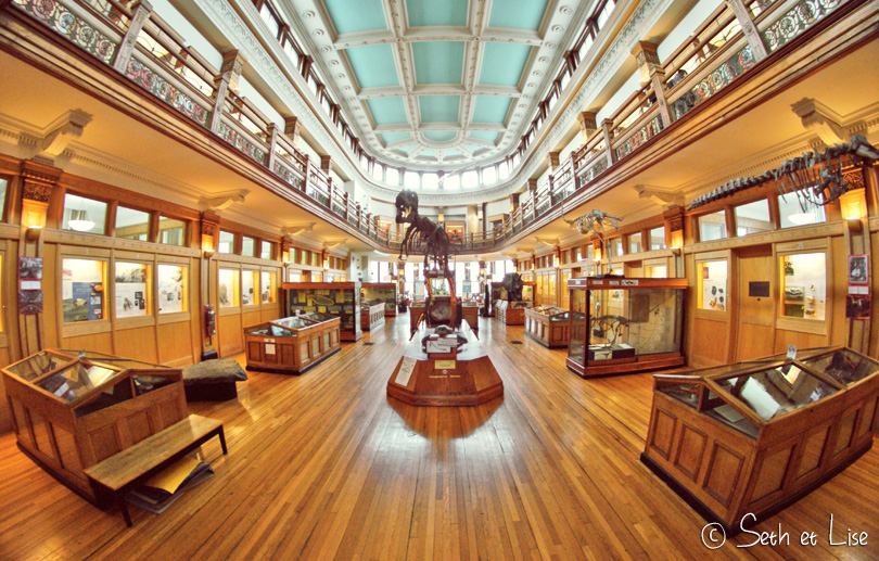 dawson gallery redpath museum