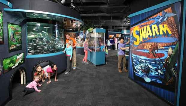 Animals Swarm At Ripley 39 S Aquarium Of The Smokies Exhibit