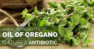 oregano healt benefits