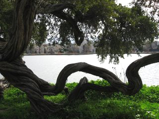 "In a series of photos I call ""Open Space"" taken Thursday at Lake Merritt in the rain, I was trying to illustrate a metaphor about fluidity. We are only stuck when we forget to take our hand out of the trap; we always have a choice. – Photo: Wanda Sabir"