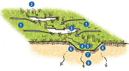 Schematic Drawing of a Swale