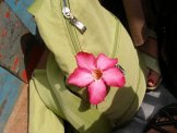 Walking along a path near the river, some young girls came running up to us and handed us these blossoms. They didn't speak any English but were very welcoming, like every person I met there.