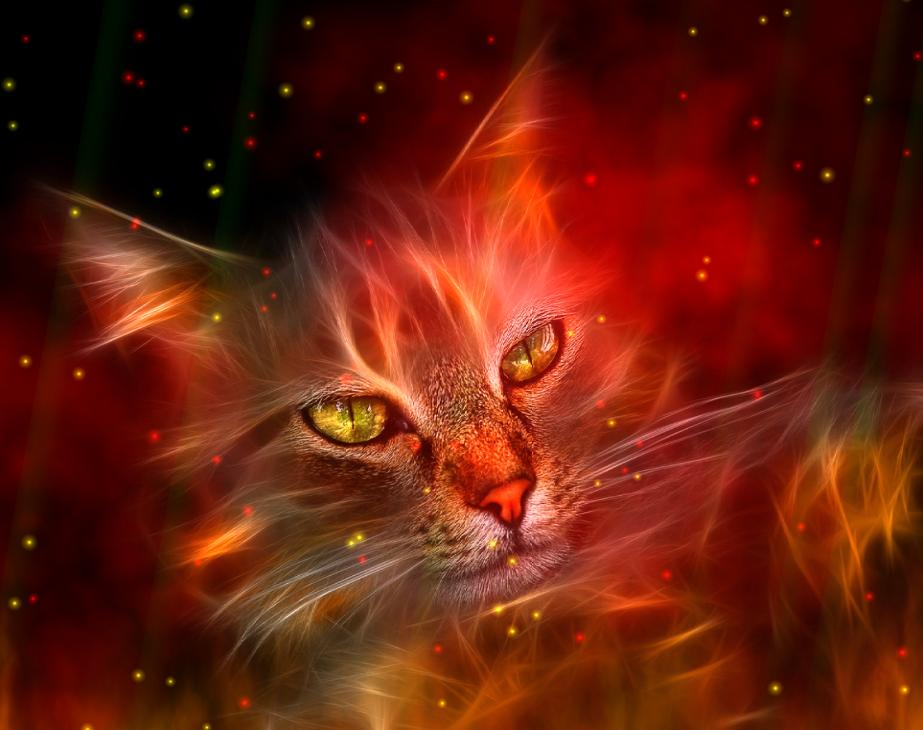 Cute Designs Full Page Wallpapers Fire Element Animated Wallpaper Free Download And Review