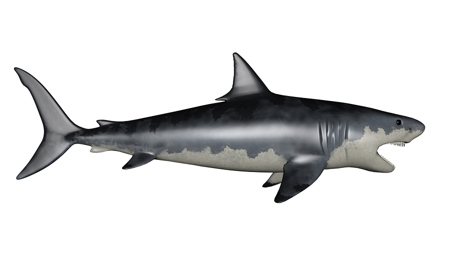 3d Star Wallpaper What Do We Know About Megalodon Sharks