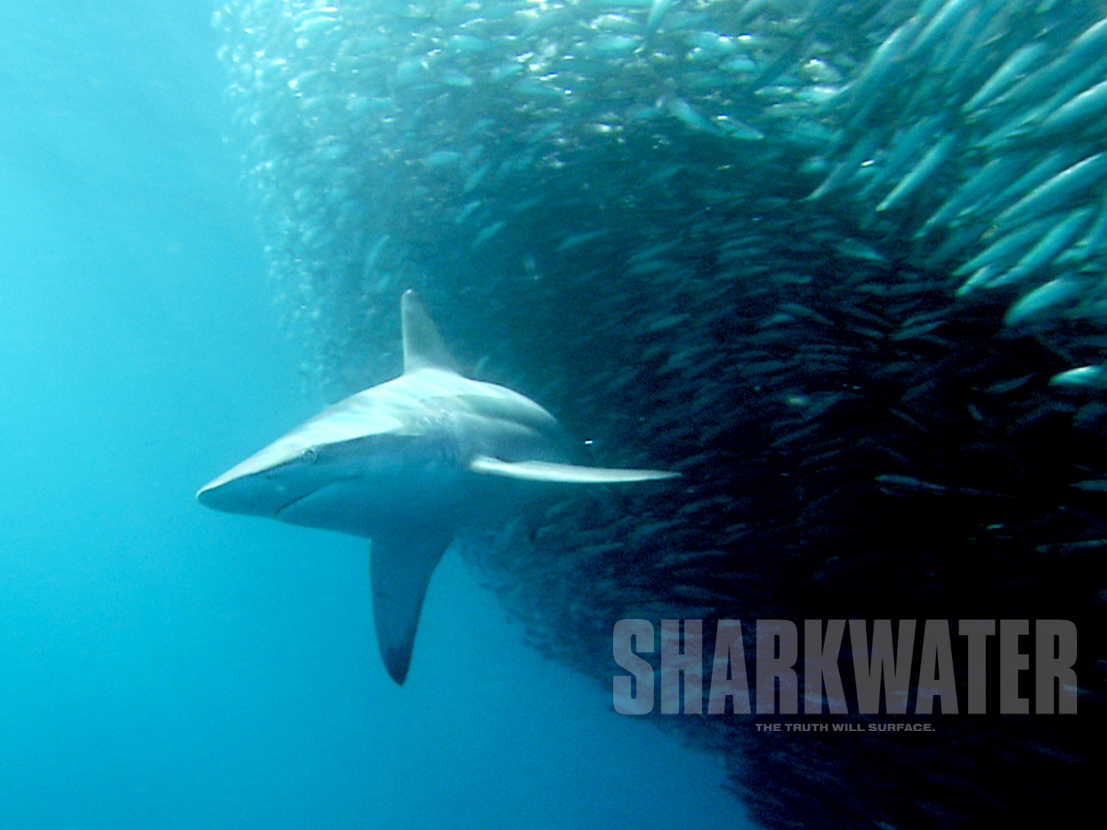 Revolution Wallpaper Hd Sharkwater Downloads Sharkwater