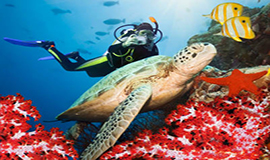 scuba diving excursions with sharmers in sharm el sheikh