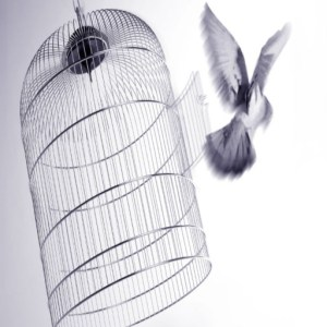 cropped-freebird.jpg