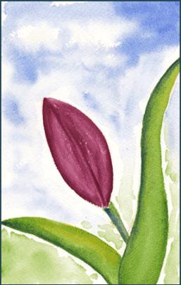 Tulip. 4 x 6 watercolor on Arches 140 lb. cold pressed paper. © 2016 Sheila Delgado
