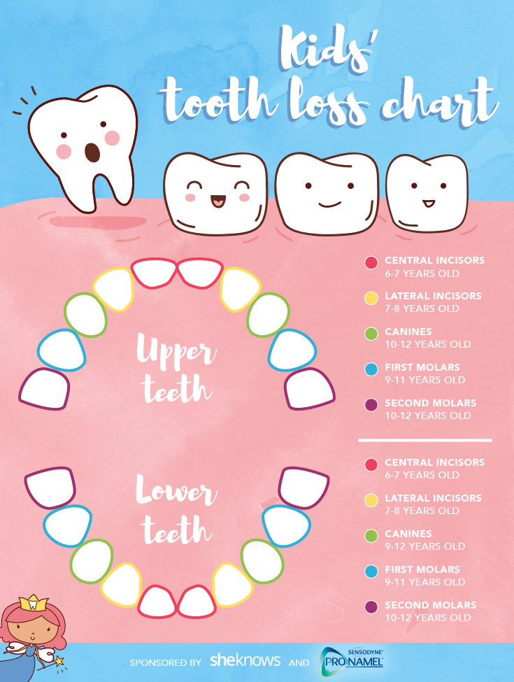 A timeline for your child\u0027s tooth loss \u2013 SheKnows
