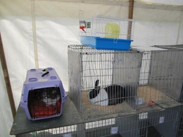 Cat vs. Rabbit