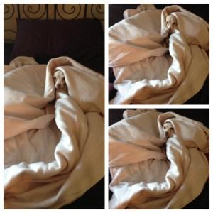 Millie in blanket