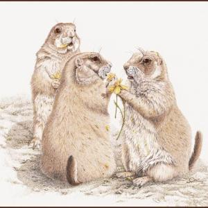 Sherry Steele Artwork - Talk of the Town | Prairie Dogs