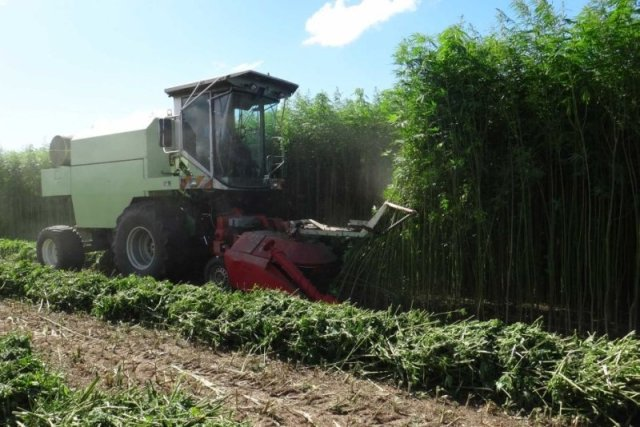 industrial-hemp-farming