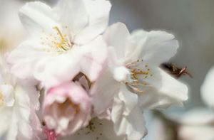 1604春の花