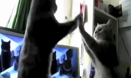 principal video manos de topo