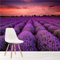 Purple Lavender Field At Sunset Floral Wall Mural ...