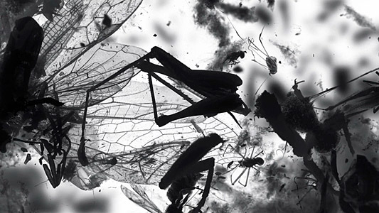 Still from THE DEATH OF AN INSECT
